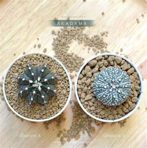 ดินญี่ปุ่น อคาดามะ Akadama Soil ใช้โรยหน้ากระถาง ล่อราก ผสมดินปลูก ไม้อวบน้ำ กระบองเพชร แคคตัส ...