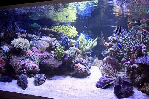 saltwater aquascape reef aquarium aquascape designs my manly fish beat up