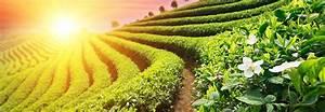 Bienfaits Du Thé Vert : les bienfaits du th vert ca va mieux ~ Melissatoandfro.com Idées de Décoration
