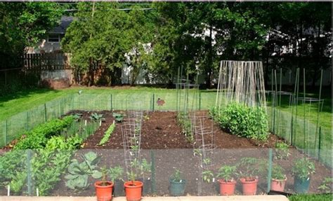 How To Start A Garden In Your Backyard by Soil Condition How To Start A Backyard Vegetable Garden