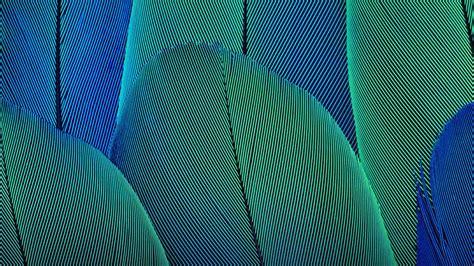 abstract leaves wallpapers hd wallpapers id