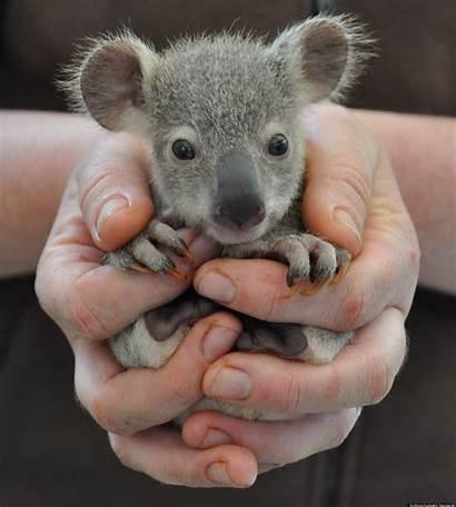 Cutest Animal Animals Adorable Babies Species Ba
