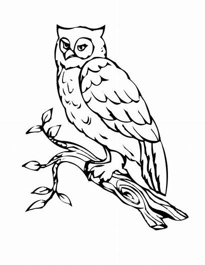 Owl Coloring Pages Bird Birds Printable Outline