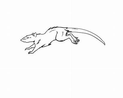 Rat Running Animated Deviantart Animation Drawing Away