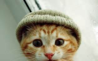 cat hat cats in hats curiepetite curie
