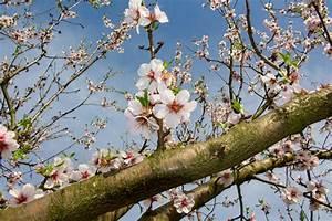 Rosa Blühende Bäume April : caf kaffeefleck wo pf lzischer mandelkaffee auf franz sische patisserie trifft vielweib on tour ~ Michelbontemps.com Haus und Dekorationen