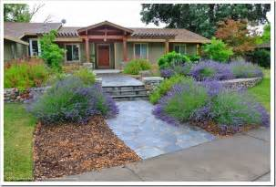 intermedia design succulents and more craftsman inspired front yard in carmichael ca design by chris corbett