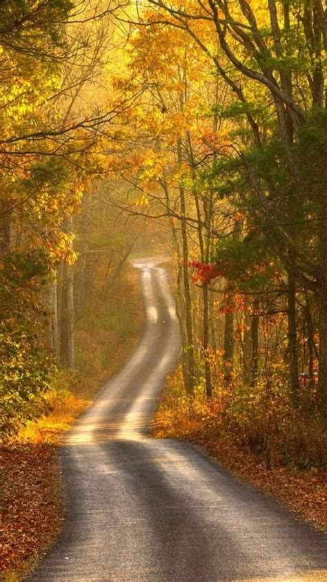 Android Hd Autumn Wallpapers by Autumn Forest Path Android Wallpaper Free