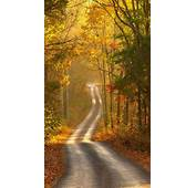 Autumn Forest Path Android Wallpaper Free Download