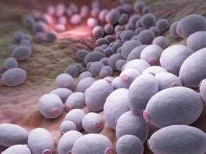 oral thrush  candida yeast infection prevented