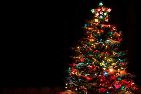 holiday tree will light up sunset park party sunset park