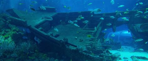 sunken treasures maritime archeologist sets explore ships