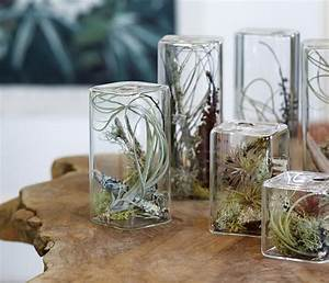 unusual air plants home decoration inspiration ideas and With house decorating gift ideas