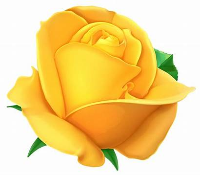 Rose Yellow Clipart Clip Transparent Roses Background