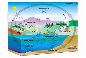 The Ins And Outs Of The Global Carbon Cycle
