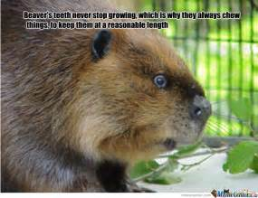 Fun Animal Facts