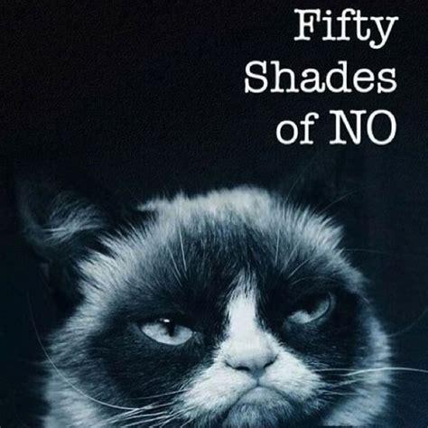 No Meme Cat - 16 of the best grumpy cat memes catster