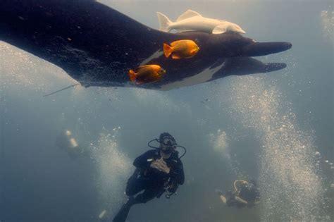 Finvalis, zirnekļkrabis un mēnesszivs - lielākie okeānu iemītnieki