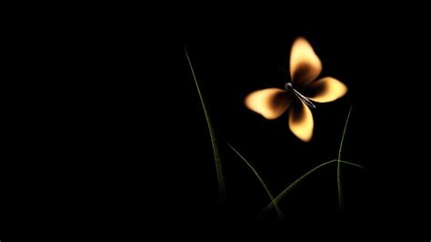black butterfly wallpaper  images