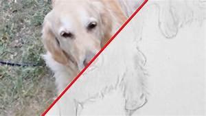 Ich Suche Einen Großen Hund : hund zeichnen im zeitraffer 02 dog drawing in fast ~ Jslefanu.com Haus und Dekorationen