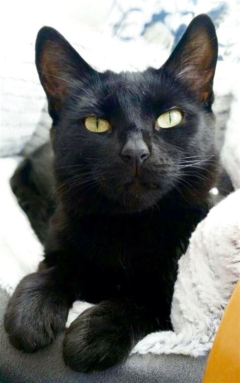 cat cats colors different eyes cute blck kitty kittens crazy lady go uploaded user feet