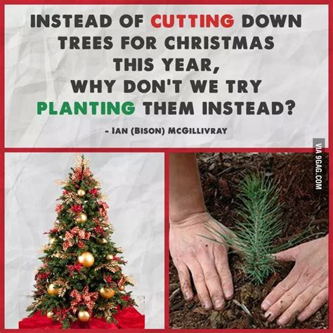 best 28 why do we cut christmas trees christmas