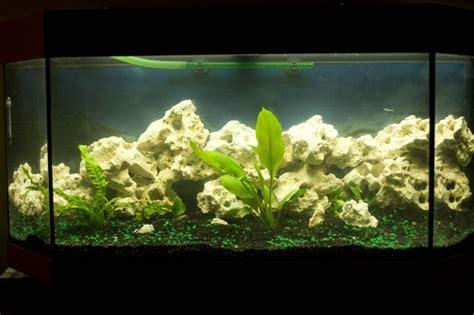 aquarium eau douce calcaire
