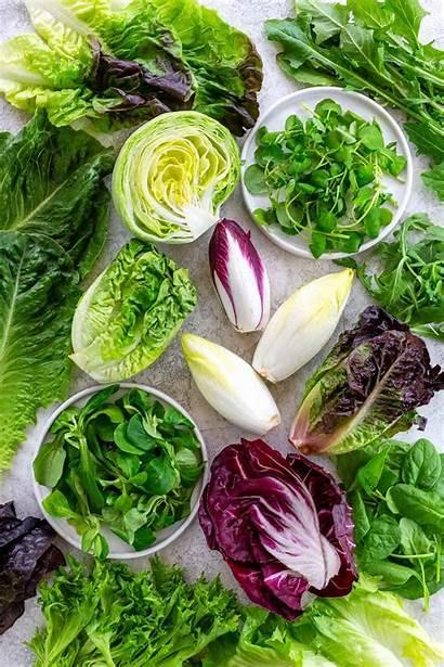 Lettuce Types Greens Leafy Salad Different Leaf