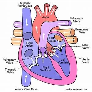 Human Heart Diagram  Anatomy  Picture  Valves  U0026 Arteries