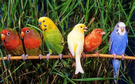different types of birds that sing pet subjects can you birds to sing in harmony telegraph