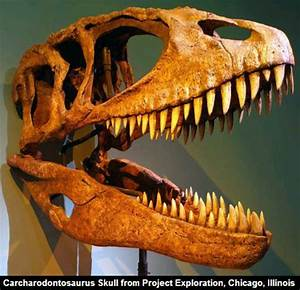 Which Theropod Dinosaur Was The Strongest And Smartest Of