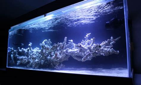 Mr. Kang's Korean Reef Aquarium Is A Field Of Exquisite