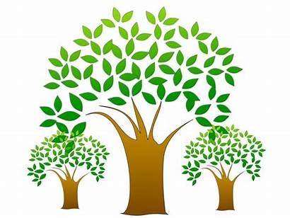 Clipart Tree Plantation Growth Trees Frost Protection