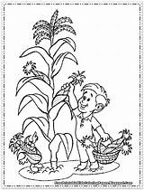 Corn Coloring Pages Wheat Printable Picking Thanksgiving Cornfield Sheets Sheet Candy Colouring Drawing Plant Cob Fruit Maiz Getcolorings Vegetables Imagenes sketch template