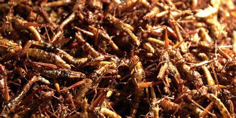 cuisiner des chayottes manger des insectes avec cette farine à base de