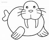 Walrus Coloring Pages Printable Preschool Clipart Drawing Cool2bkids Animals Clip Arctic Sea Outline Craft Polar Animal Children Crafts Ocean Line sketch template