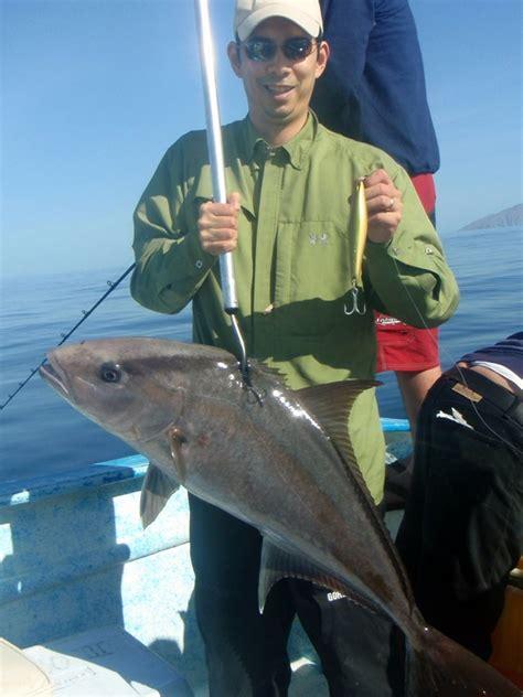 amberjack fish catch fishing baja species enlarge below pic howtocatchanyfish