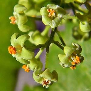 Something Wild: Poison Ivy | New Hampshire Public Radio