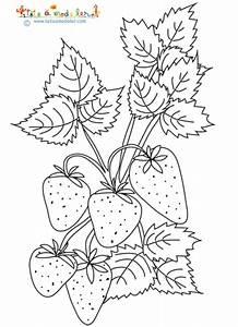 Plant De Fraisier : les fraises ~ Premium-room.com Idées de Décoration