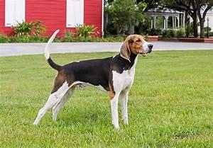 SCOUT | Top 15 Dog Breeds That Run Away
