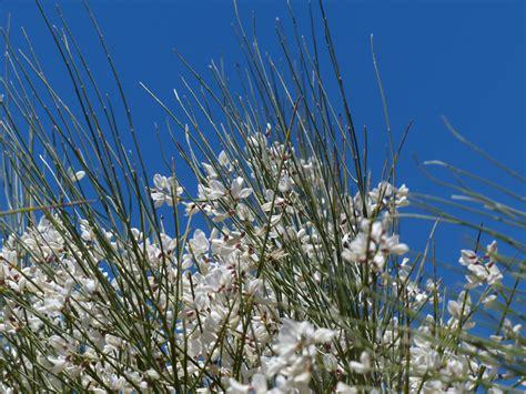 fiori molto profumati kostenlose foto baum natur gras ast bl 252 hen wei 223