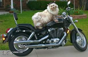 empehi motorcycle cats