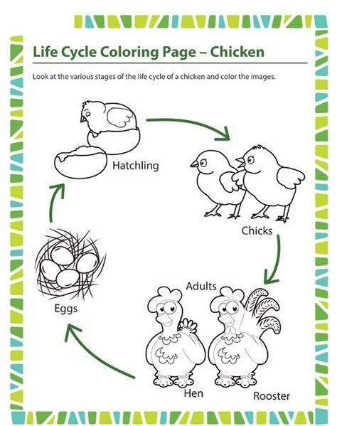 Animal Life Cycle Worksheet For Kids  Crafts And Worksheets For Preschool,toddler And