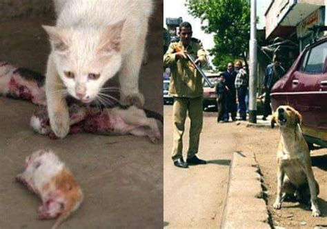 stop egypt  poisoning shooting  exporting dogs