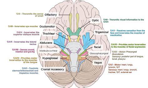examination  cranial nerves  dr cahide topsakal