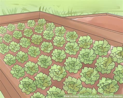 Keep Weeds Out Of Garden by 3 Ways To Keep Weeds Out Of Your Vegetable Garden Wikihow