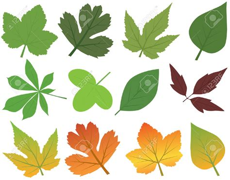 leaf collection clipart clipground