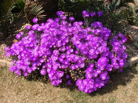 flower shrubs purple flowers bush 9 desktop wallpaper hdflowerwallpaper com