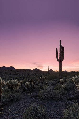 desert sunset cactus landscape printed photography