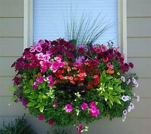 Kuebelpflanzen Fuer Terrasse : blumenkasten f r balkon wunderbare blumen garten und haus pinterest ~ Orissabook.com Haus und Dekorationen
